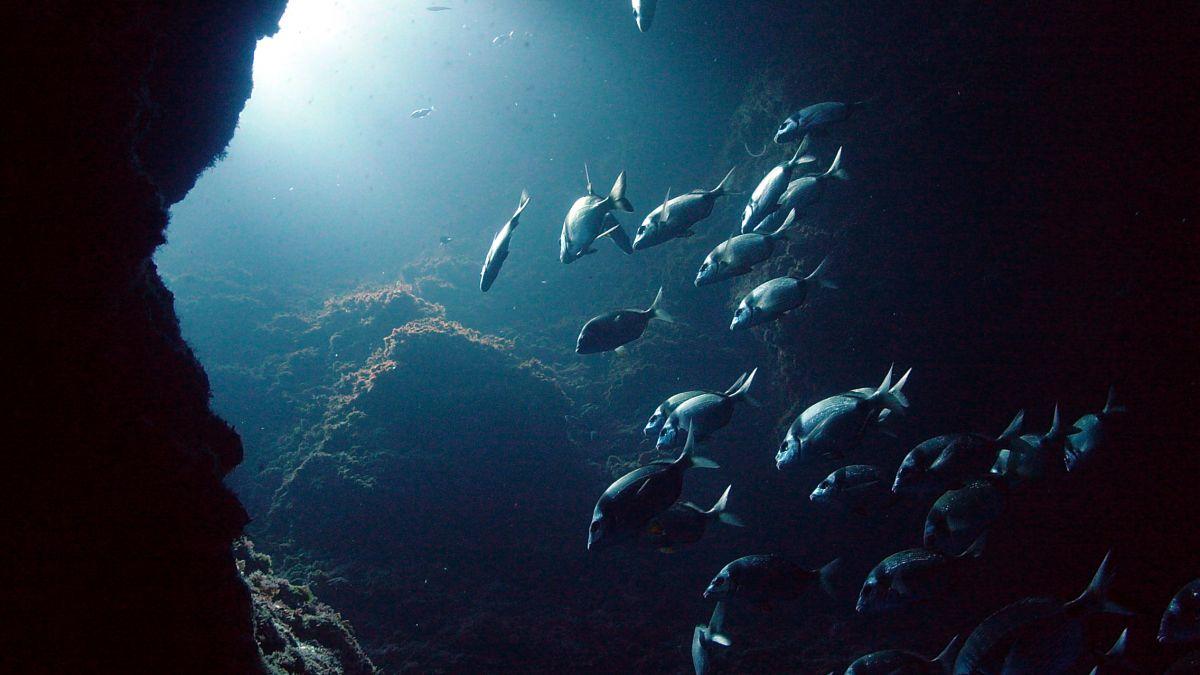Les îles Medes, réserve naturelle