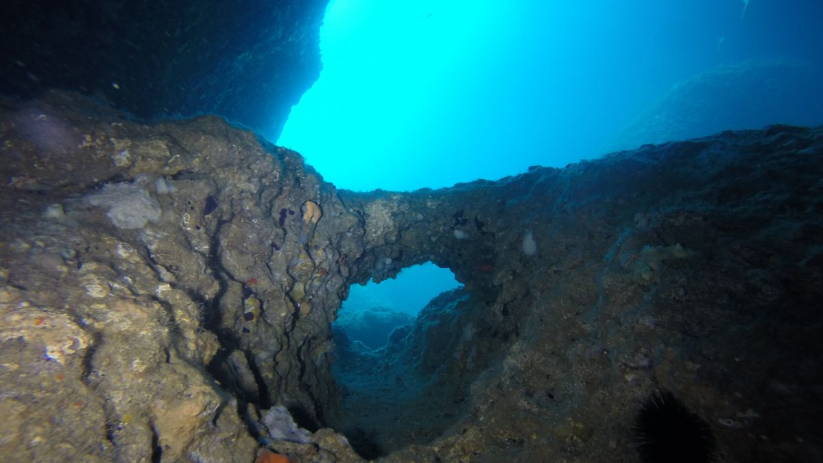 Dofí Sud