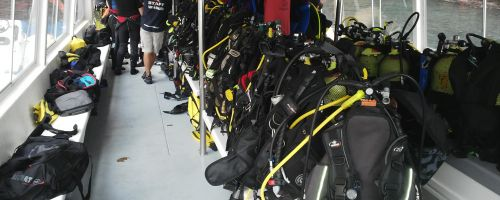 All ready for the dive!